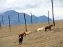Алтай-2009, Чуйская степь. Южно-Чуйский хребет.