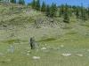 зеленые пятна можжевельника