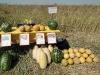 презентация фермерских хозяйств