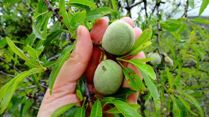 оливки Испания