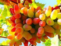 Частная винодельня в Ожио