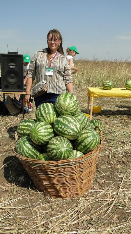 Фестиваль Соль-Илецкий арбуз