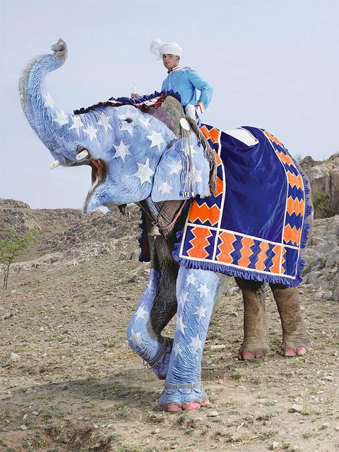Фестиваль слонов в Индии