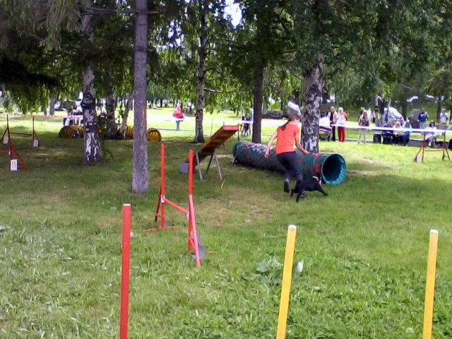 соревнования собак по аджилити
