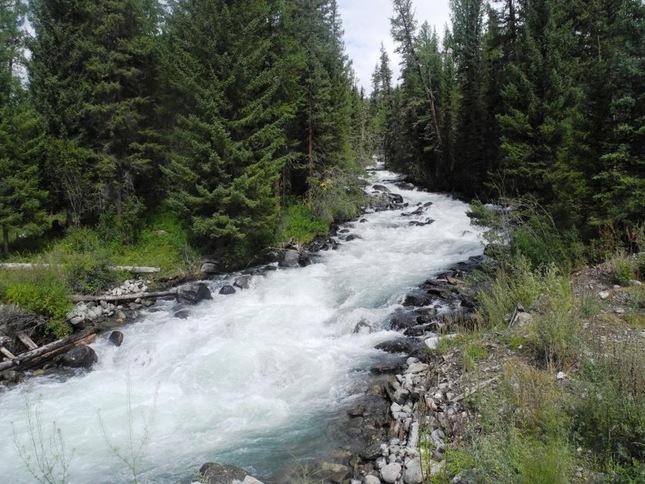 реки Дремучего леса