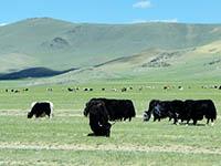 Монголия дороги и пейзажи