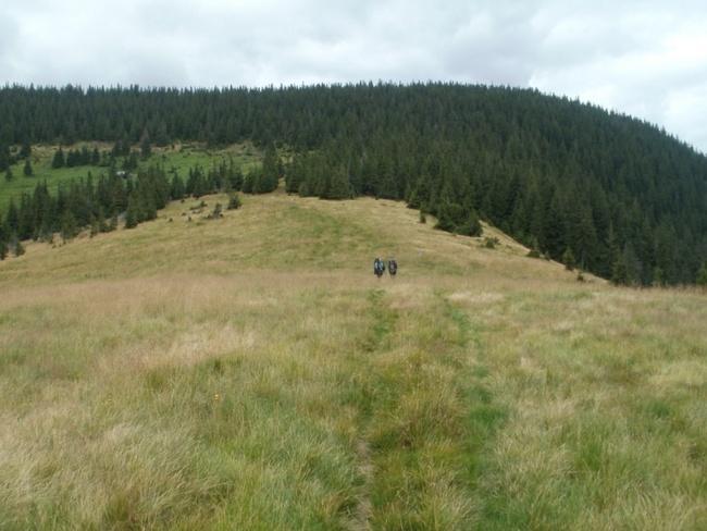 koyl-karp2011-081