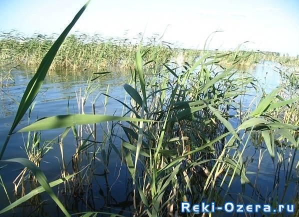 Озеро Тайшино