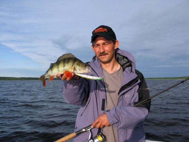 окунь Рыбинское водохранилище